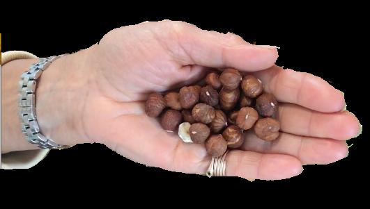Eine Portion Nüsse beträgt ca. 1 Handfläche