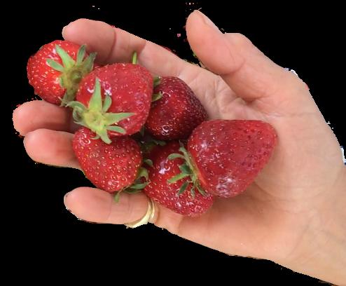 Eine Portion Obst beträgt ca. 1 Handvoll