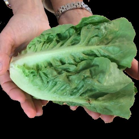 Eine Portion Salat pro Tag beträgt ca. 2 Handvoll