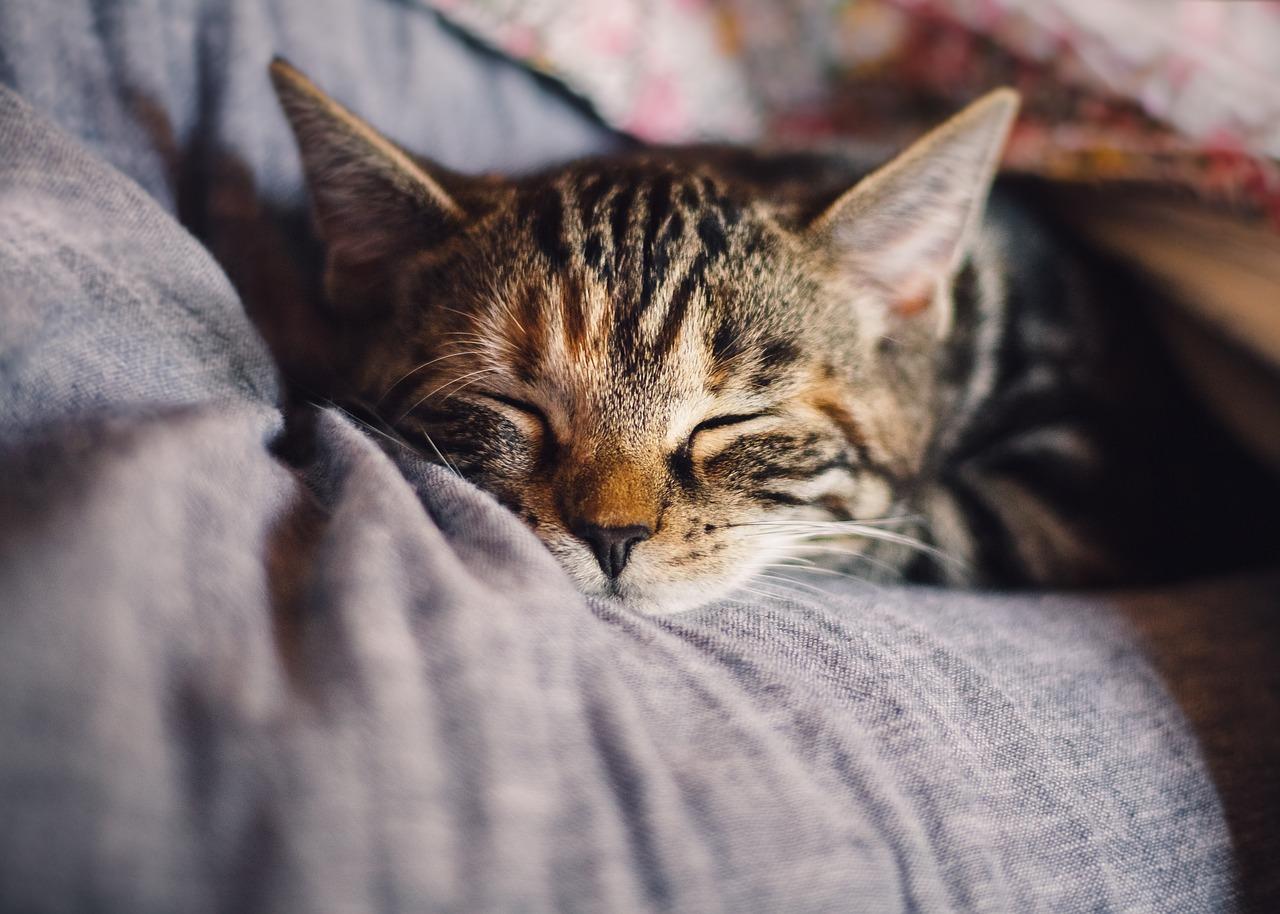 schlafende Katze auf Arm