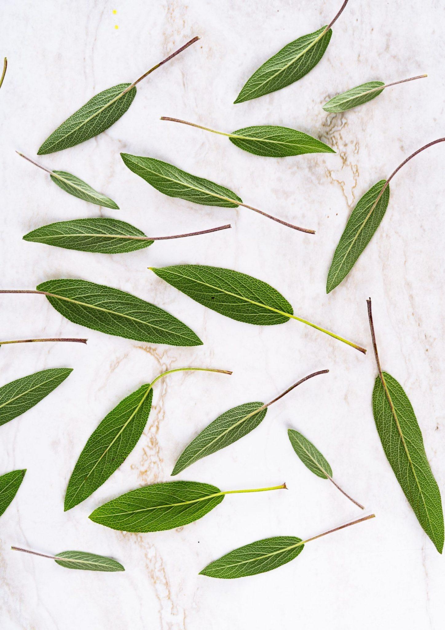Grüne Blätter auf weißem Untergrund